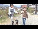 【今週のペット】モコ(トイ・プードル、メス・2才)