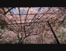 2011年春の京都に行ってきた(9)【龍安寺~】
