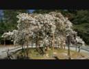 2011年春の京都に行ってきた(10)【西山】