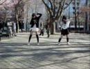 【蓮奈×てらしまと】ZIGG-ZAGG踊ってみた【愉快な仲間たち】