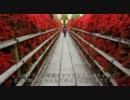 2011年春の京都に行ってきた(11)【長岡天満宮】