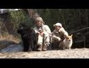 【今週のペット】バウ(ニューファンドランド、オス・4歳)&イチ(コーギー、オス・2歳)