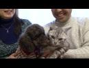 【今週のペット】あいす(アメリカン・ショートヘア、オス・7歳1カ月・猫)&チョコ(トイ・プードル、オス・2歳10カ月・犬)