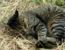 猫動画 寝ている猫