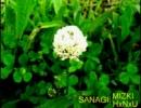【ニコラップ】SANAGI【HumanNoiseUpset&MIZKI】