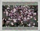大神 東京ゲームショウ2005 公開映像