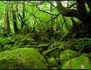 【自作曲】森林浴