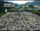 福建省最大の川 魚の異常大量死