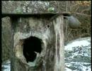 ネコVS鳥
