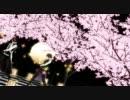 【MMD】薄桜鬼で【凛として咲く花の如く】