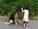 幼女とシェパードのお散歩