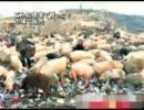 ゴミ処理場で牛や豚を放牧してそれらを市場で販売する中国の実態