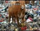 【新唐人】ごみ処理場で育った牛 市場で販売