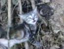 枝に挟まれて身動きできない子猫がいたから助けてあげた