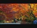 2011年紅葉の京都・滋賀に行ってきた(22)【光明寺】