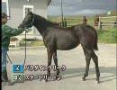 【テイエムプリキュア】馬見の極意DVD 実践編より【競馬】