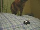 タミヤのコラボモデルQステアを買ってみた。そしてネコ。