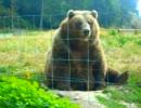 クマに手を振ると可愛い反応