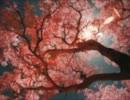 桜の時歌ってみた(´・ω・`)