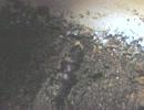 クチバスズメちゃんのサナギ61【投稿1000