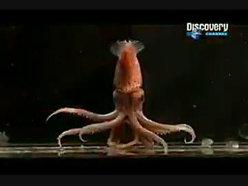 巨大生物追跡 ~巨大イカを追って~ (01 of 02)