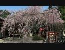 桜の京都【2012/4/8】