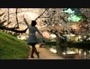 【夜桜満開!】千本桜踊ってみました【折原】