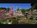 2012年京都に行ってきた(2)【春の城南宮】