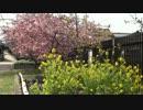 2012年京都に行ってきた(3)【河津桜】