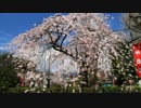 2012年京都に行ってきた(5)【桜の伏見】