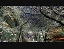 2012年京都に行ってきた(6)【桜の祇園白川】