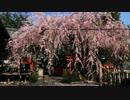 2012年京都に行ってきた(9)【洛中の桜】