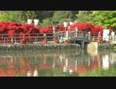 春の京都(2012/4/29)