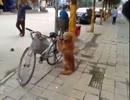 ご主人様の自転車を死守する犬