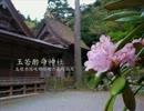 【高画質】古社の風景 ~隠岐 玉若酢命神社~