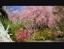 2012年京都に行ってきた(16)【桜の原谷苑】
