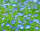 【オーケストラ】花になる【sm17845089のアレンジ】