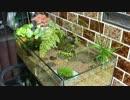 実験水槽その7