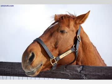 【お見舞い】世界一位の競走馬