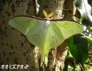 身近な蛾たち~春の部~前編