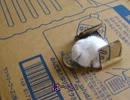 リアル『猫貯金箱』