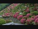 2012年京都に行ってきた(23)【蹴上のツツジ~】