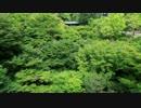 2012年京都に行ってきた(37)【緑の東福寺】