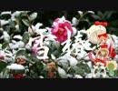 【猫村いろは】 雪椿 【演歌】