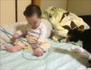 赤ちゃんと見守る子猫10 千代と千明と猫じゃらし