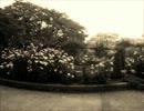 【桜】セツナトリップオリジナルで踊ってみま