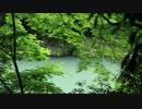2012年京都に行ってきた(41)【濃緑の嵐山】