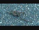 ニホンカナヘビの交尾