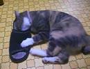 スリッパとじゃれる猫