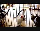 【生後】何だ、ただの猫兵隊訓練所か【2か月】